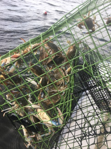 FishingReport_373