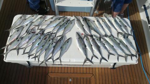 FishingReport_608