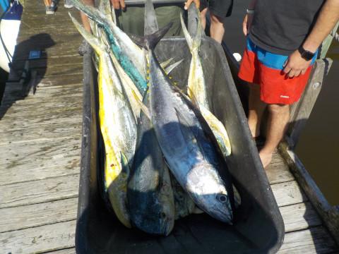 FishingReport_733