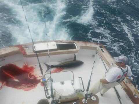 FishingReport_915