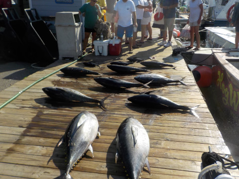 FishingReport_1103