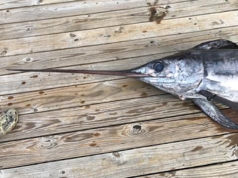 FishingReport_1402