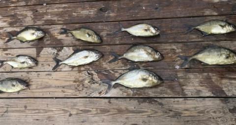 FishingReport_1429