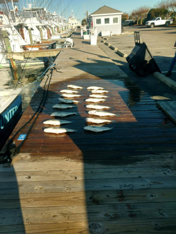 FishingReport_1524