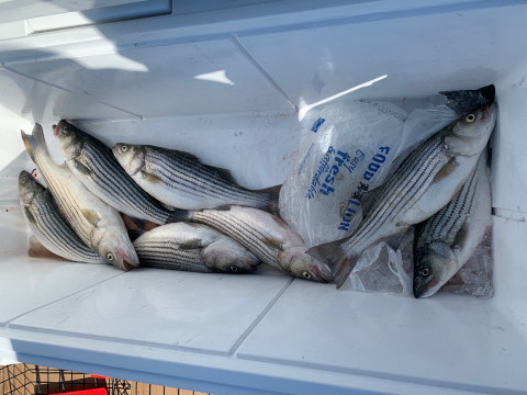 FishingReport_1527