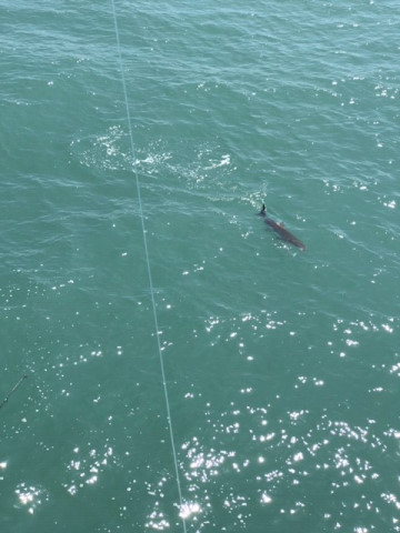 FishingReport_1550